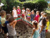 лунки для посадки семян